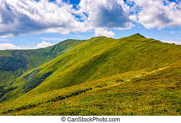 path through a meadow to mountain peak - path through a...