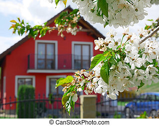 Detail of cherry blossom with a house in the background