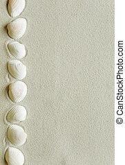 Row of of seashells on a sea sand - Border of seashells on...