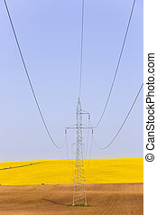 Electricity powerlines over colorful rape seed fields -...