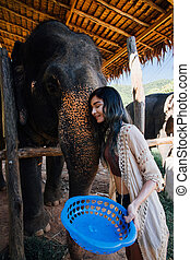 Model woman hugging a big elephant in the zoo-park after...