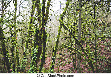 Mossy Trees in Foggy Forest