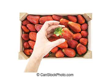 Hand picking/placing red ripe strawberry from a wooden box,...