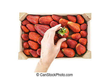 Hand picking red ripe strawberry from wooden box, isolated...