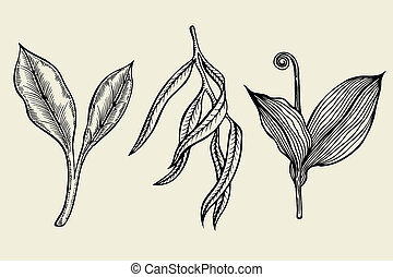 hand drawn ink sketch spring branches - set of hand drawn...