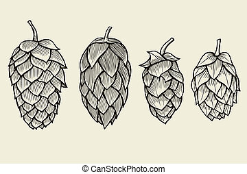 Hand drawn Hops set - Hand drawn engraving style Hops set....