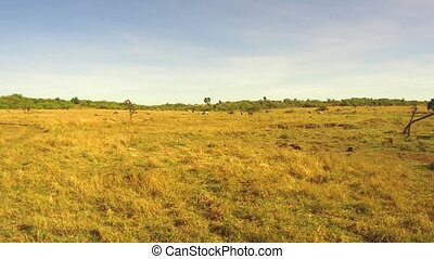 animals grazing in savanna at africa - nature, landscape,...