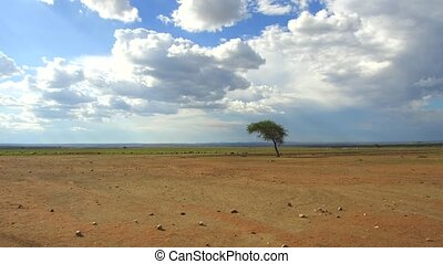 flock of sheep gazing in savanna at africa - animal, nature...