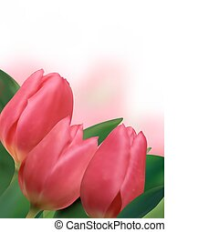 Pink tulips with copyspace on white background. EPS 8 vector...