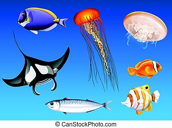 Different kinds of sea animals underwater