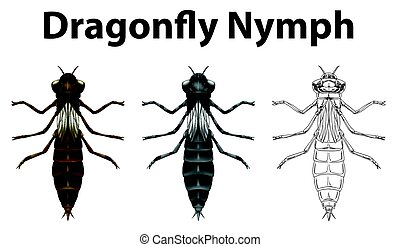 Dragonfly nymph in three different drawing styles...