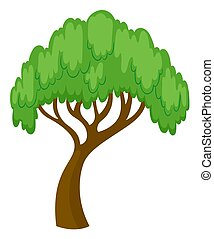 Willow tree on white background illustration