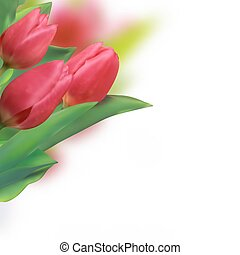 Spring holiday red tulip.
