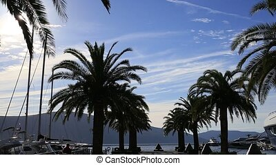 Silhouette of a palm tree at sunset. Montenegrin sunsets on...