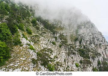 Mountain Ai-Petri. Crimea, Ukraine. May 2008