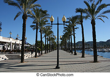 Cartagena - Line of palm trees - seaside boulevard in...