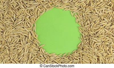 Rotation of the oat grains lying on a green screen, chroma key.