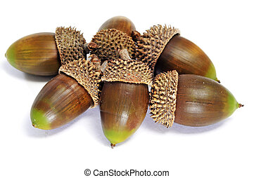 acorns - a pile of acorns isolated on a white background