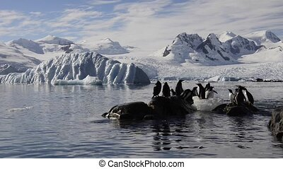 Gentoo Penguins on the beach in Antarctica