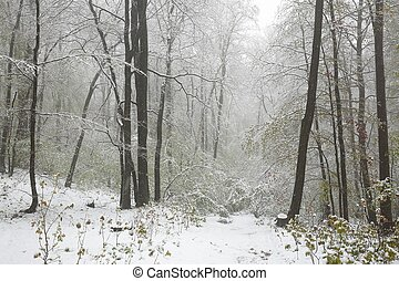 Early spring forest during snowfall