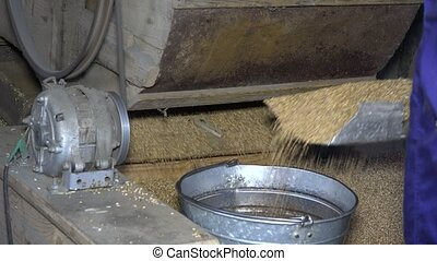 Machine sifting grain and worker hands draw oat and pour...