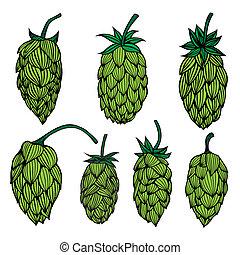 Set Hop plant - Set og Hop plant art drawing illustration....