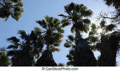 Palm trees sway in the wind in back lighting at sunny summer...