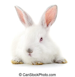 White bunny rabbit. - Isolated image of a white bunny...
