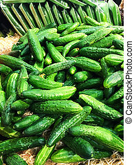 Pile of fresh organic green cucumbers on a market close up