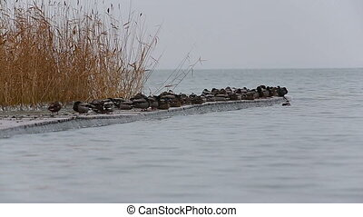 Beautiful winter landscape from a lake Balaton with wild...