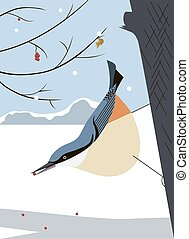 Nuthatch in the tree - Nuthatch moves virtuously along the...
