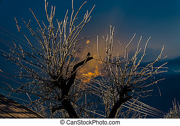 Iced branches of trees on a frosty day. The sun behind the...