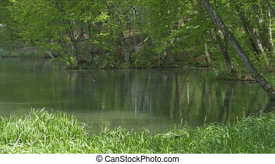 Pond in the Forest - Quiet pond in the green forest with...