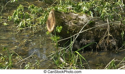 Stump in the Swamp - Pan shot to a trunk on a green marsh.