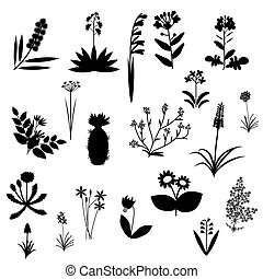 Flowers set collection - Black and white flowers vector set