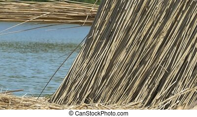 Building Reed near Lake - Reed for construction at building...