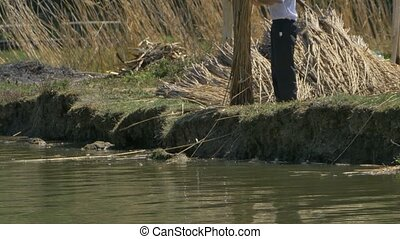Reed Worker near Shore - A man is working with reed near the...