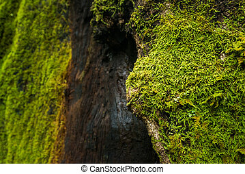 Moss - Green moss growing on a tree in dense and lush forest