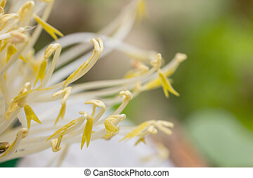 Raw fresh beansprouts - Close up raw fresh beansprouts with...