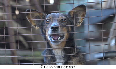 Dog barking slow motion - The dog barks in the enclosure....