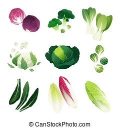 Cabbage varieties - Clip art collection of various cabbage...