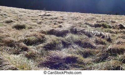 Wind on the mountain meadow