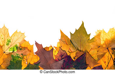 colorful autum leaves - Colorful autumn leaves with copy...