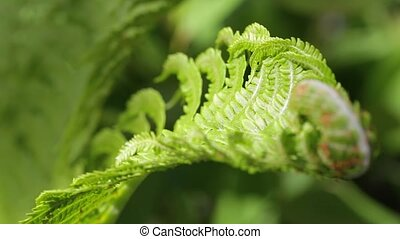 branch of the fern - The branch of the fern grows in the...