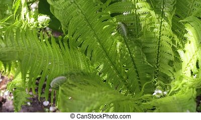 bush of the fern grows
