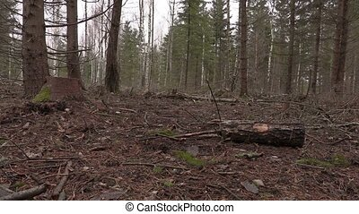 Lumberjack lift up small log in destroyed forest