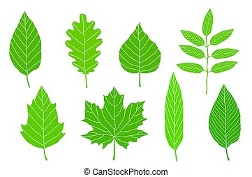 set of green leaves - set of hand drawn green leaves on...
