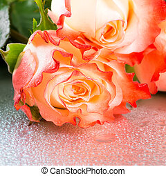beautiful rose flowers on light background with drops, close...