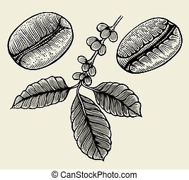 Hand drawn arabica beans. Black on beige background. Hand...