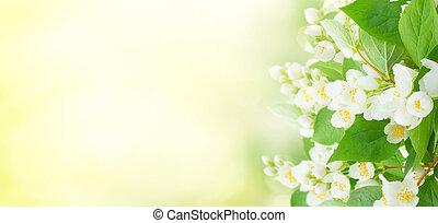 Jasmine flowers and leaves over sunlit garden bokeh...